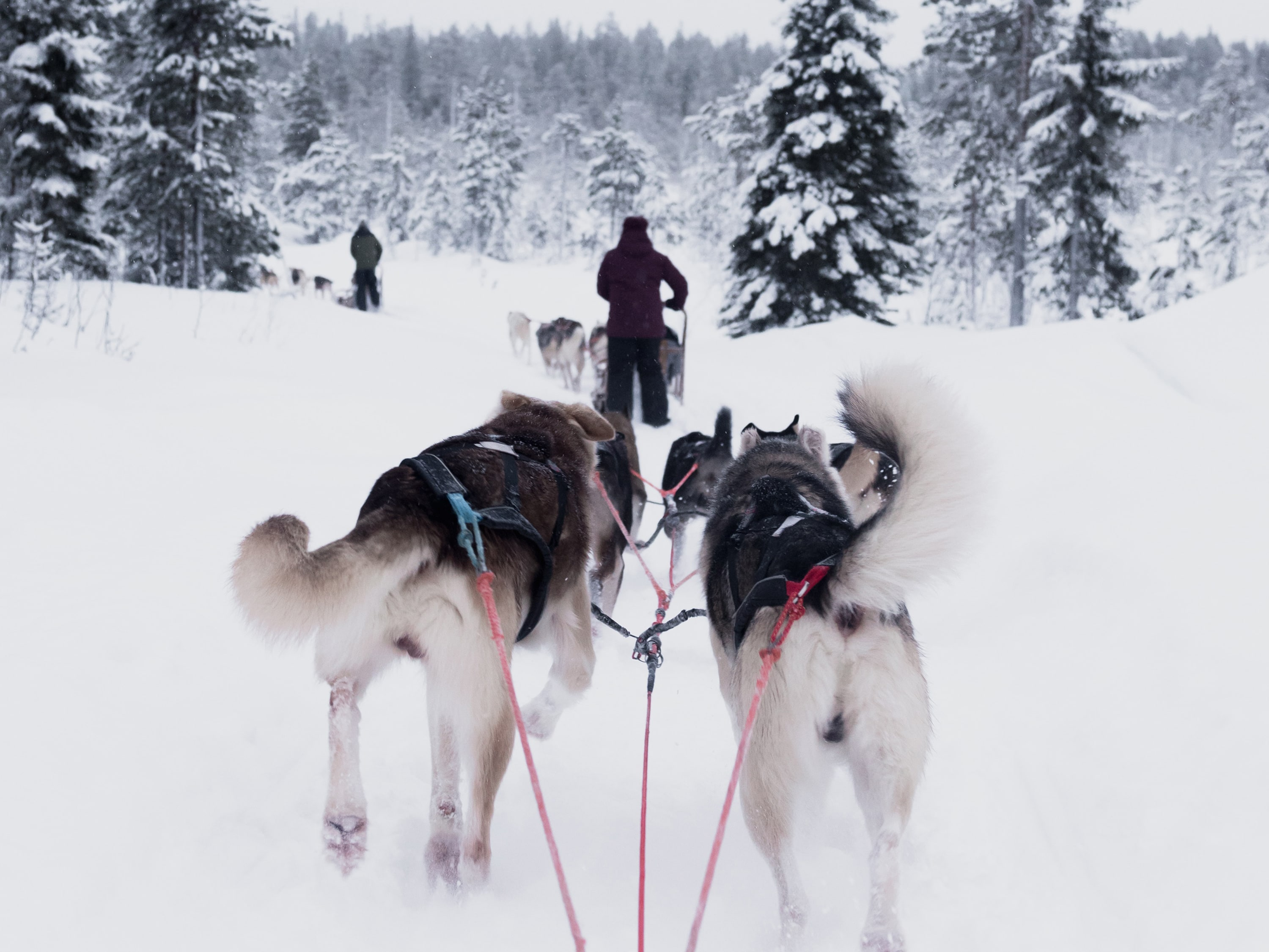 Combi tour with dog sledge